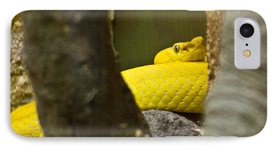 Yellow IPhone 7 Case featuring the photograph Wicked Snake by Douglas Barnett