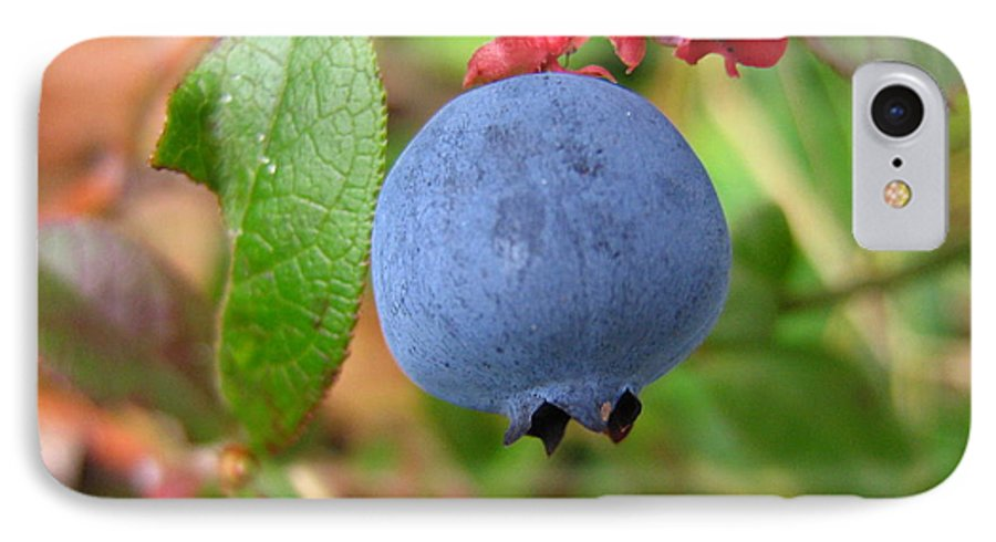 Blueberry IPhone 7 Case featuring the photograph Wild Blueberries by Melissa Parks