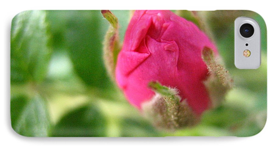 Rose IPhone 7 Case featuring the photograph Wild Rose Bud by Melissa Parks
