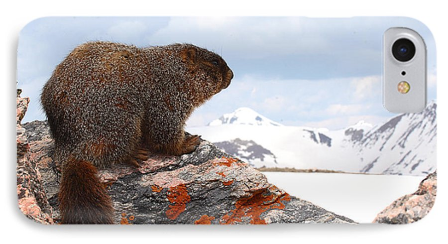 Marmot IPhone 7 Case featuring the photograph Yellow-bellied Marmot Enjoying The Mountain View by Max Allen