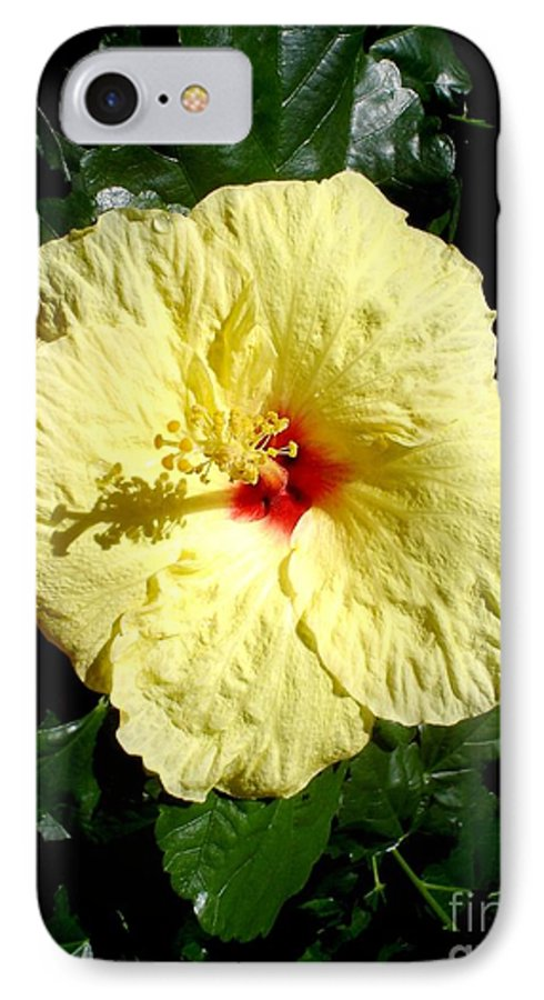 Flower IPhone 7 Case featuring the photograph Yellow Hibiscus The Hawaiian State Flower by Chandelle Hazen