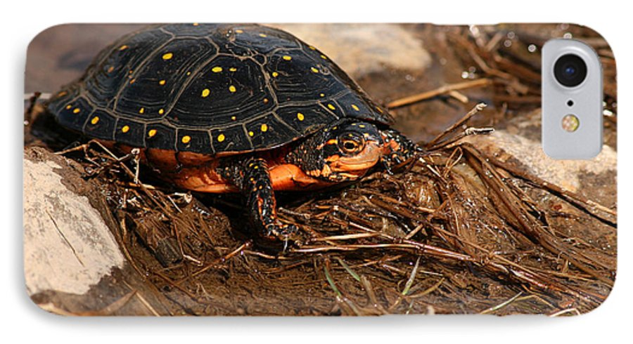 Turlte IPhone 7 Case featuring the photograph Yellow-spotted Turtle Crawling Through Wetland by Max Allen