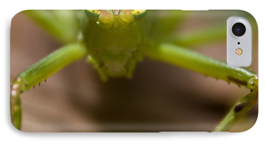 Katydid IPhone 7 Case featuring the photograph You Said What by Douglas Barnett