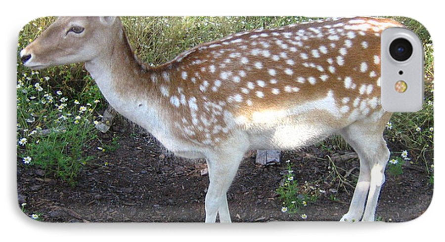 Deer IPhone 7 Case featuring the photograph Young Doe by Melissa Parks