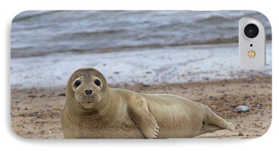 Seal IPhone 7 Case featuring the photograph Young Seal Pup On Beach - Horsey, Norfolk, Uk by Gordon Auld