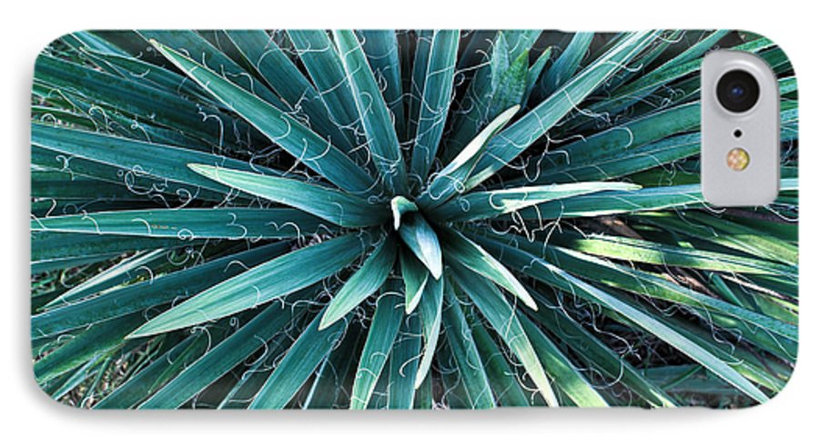 Yucca IPhone 7 Case featuring the photograph Yucca Plant Detail by Douglas Barnett