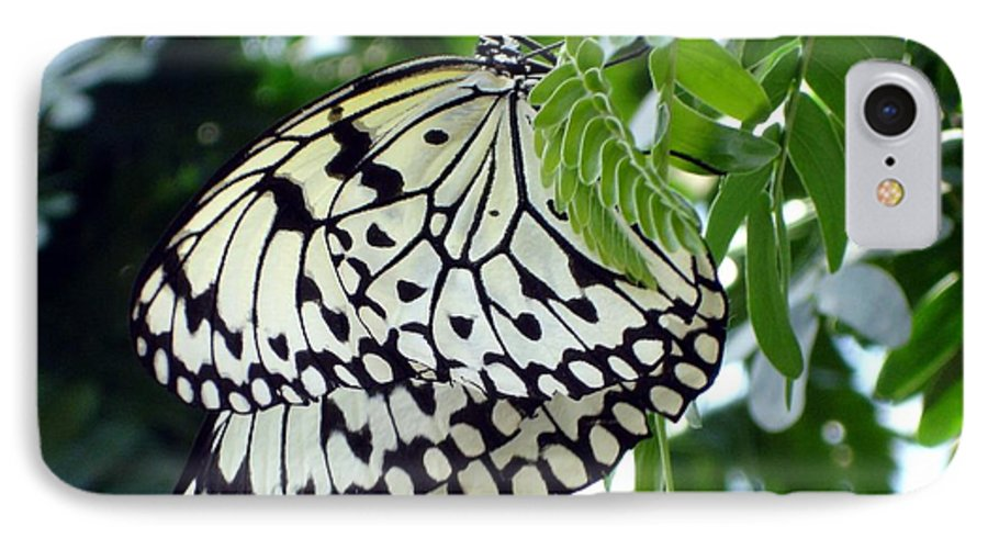 Butterfly IPhone 7 Case featuring the photograph Zebra In Disguise by Shelley Jones