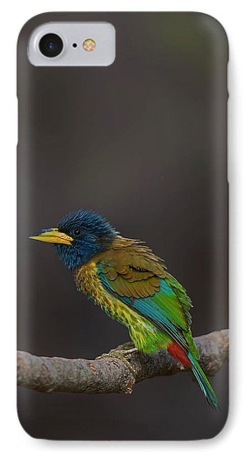 Bird Images For Print IPhone 7 Case featuring the photograph Great Barbet by Uma Ganesh