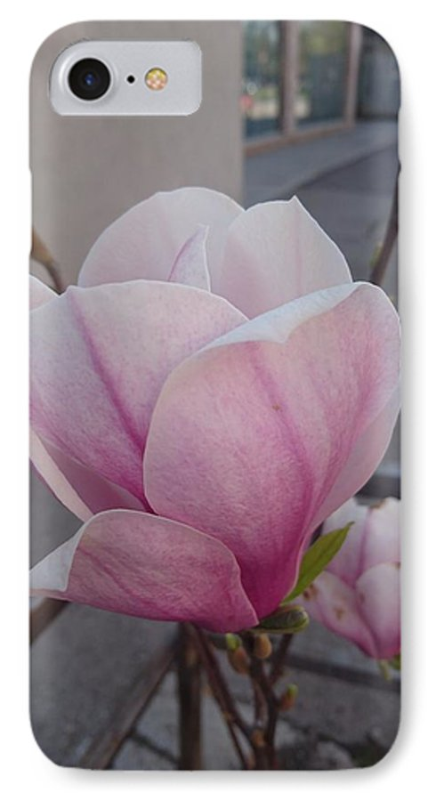 IPhone 7 Case featuring the photograph Magnolia by Anzhelina Georgieva