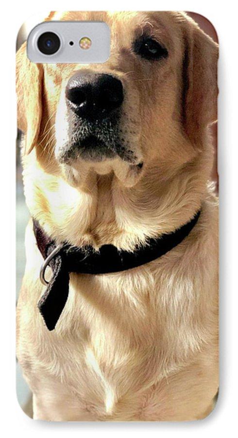 Labrador Dog IPhone 7 Case featuring the photograph Labrador Dog by Arun Jain