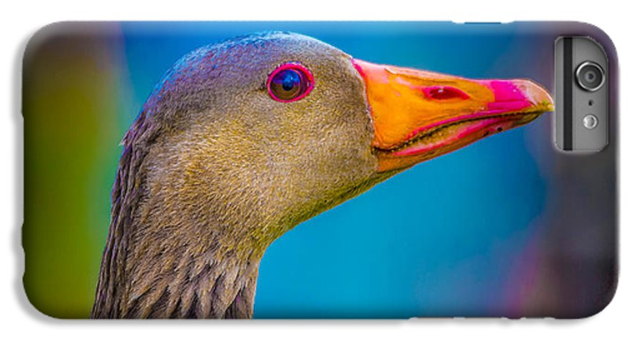 Photography IPhone 7 Plus Case featuring the photograph Portrait Of Greylag Goose, Iceland by Panoramic Images