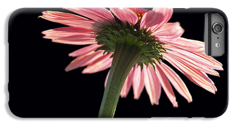 Echinacea IPhone 7 Plus Case featuring the photograph Coneflower by Tony Cordoza
