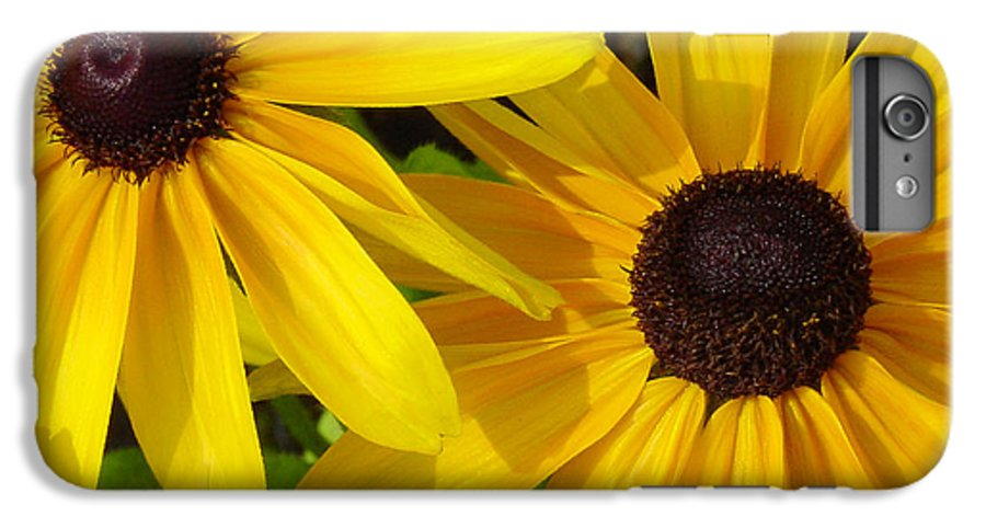 Black Eyed Susan IPhone 7 Plus Case featuring the photograph Black-eyed Susans Close Up by Suzanne Gaff