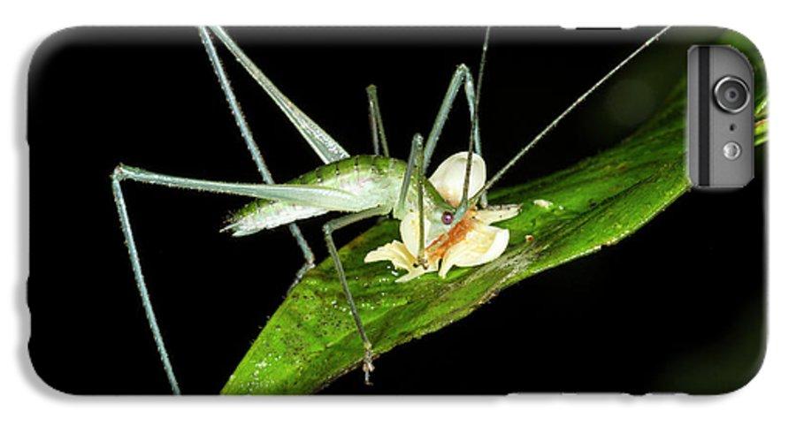 Bush Cricket Eating A Fallen Flower Iphone 7 Plus Case