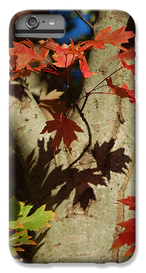 Autumn IPhone 7 Plus Case featuring the photograph Carolina Autumn by Suzanne Gaff