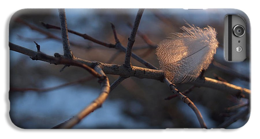 Branch IPhone 7 Plus Case featuring the photograph Downy Feather Backlit On Wintry Branch At Twilight by Anna Lisa Yoder