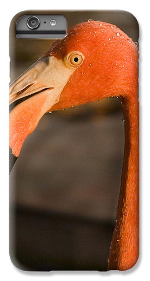 3scape Photos IPhone 7 Plus Case featuring the photograph Flamingo by Adam Romanowicz