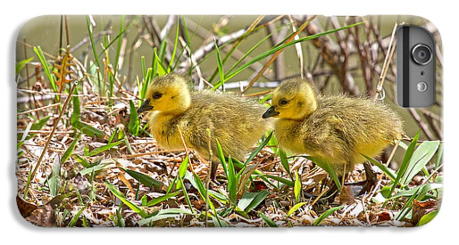 Goose IPhone 7 Plus Case featuring the photograph Little Ones by Betsy Knapp