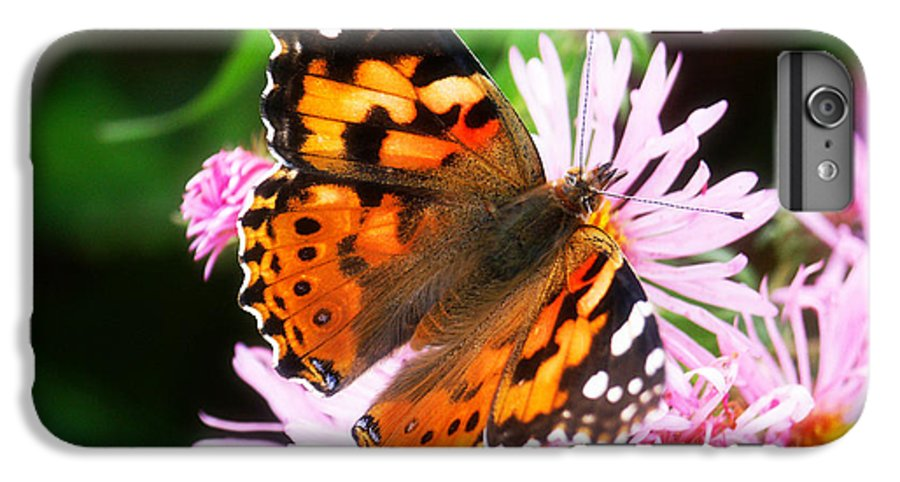 Flower IPhone 7 Plus Case featuring the photograph Late Summer Painted Lady by Marilyn Hunt