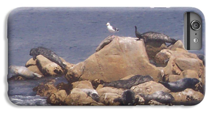 Seal IPhone 7 Plus Case featuring the photograph Monterey Sun Bath by Pharris Art