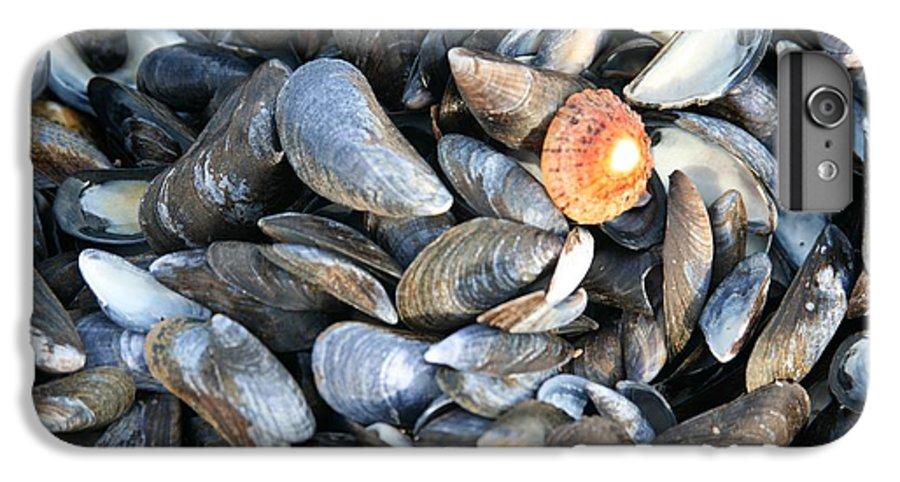 Shells IPhone 7 Plus Case featuring the photograph Odd Man Out by Christopher Rowlands