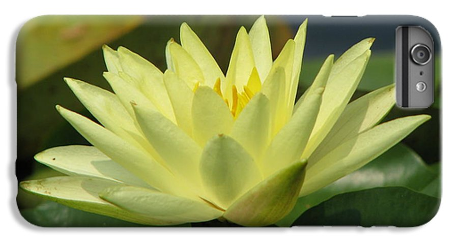 Lillies IPhone 7 Plus Case featuring the photograph Peace by Amanda Barcon