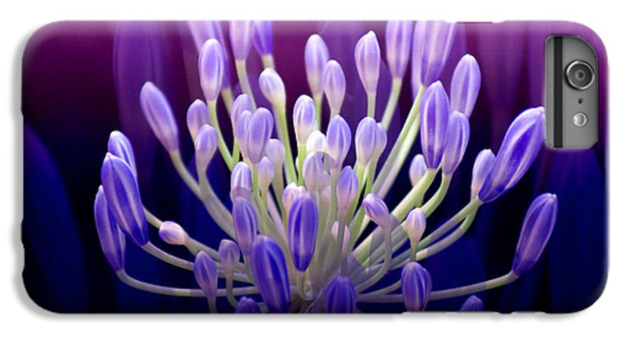 Agapanthus IPhone 7 Plus Case featuring the photograph Praise by Holly Kempe