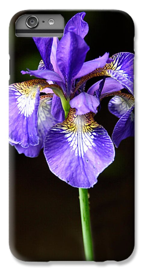 3scape IPhone 7 Plus Case featuring the photograph Purple Iris by Adam Romanowicz