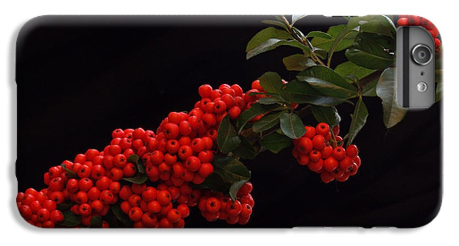 Winter IPhone 7 Plus Case featuring the photograph Pyracantha Berries On Black - Pennsylvania by Anna Lisa Yoder