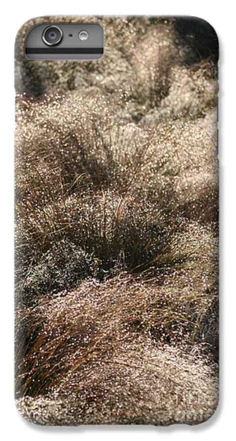 Grasses IPhone 7 Plus Case featuring the photograph Sparkling Grasses by Nadine Rippelmeyer