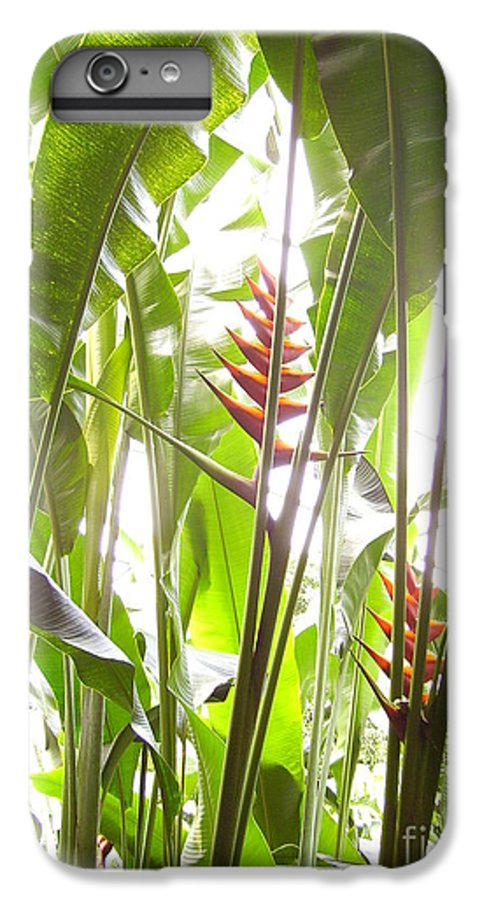 Plants IPhone 7 Plus Case featuring the photograph Tropical2 by Heather Morris