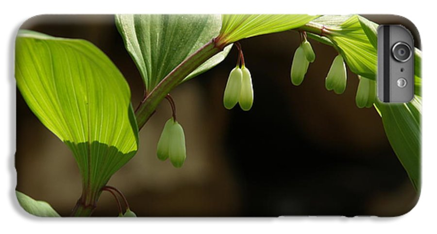 Solomon's Seal IPhone 7 Plus Case featuring the photograph Variegated Solomon's Seal In Spring - Pennsylvania by Anna Lisa Yoder