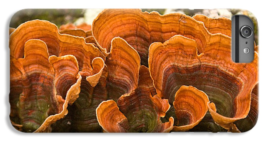Bracket IPhone 7 Plus Case featuring the photograph Bracket Fungi by Douglas Barnett