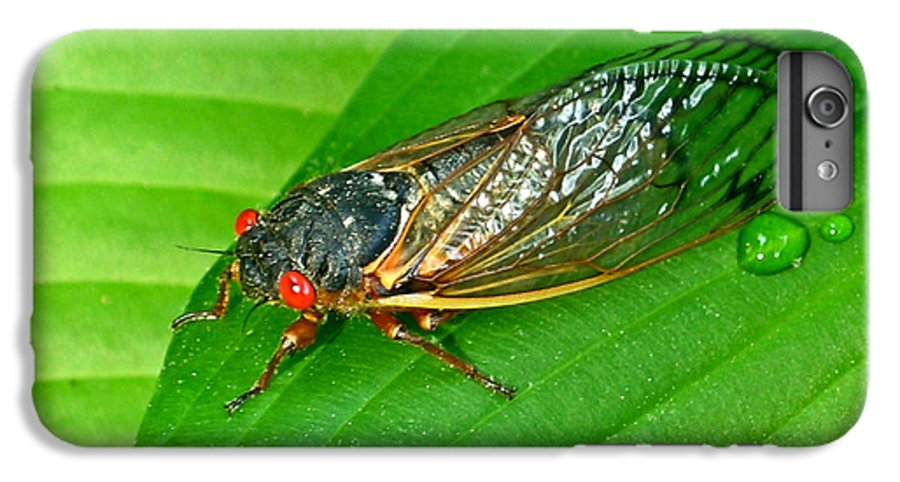 17 IPhone 7 Plus Case featuring the photograph 17 Year Periodical Cicada by Douglas Barnett