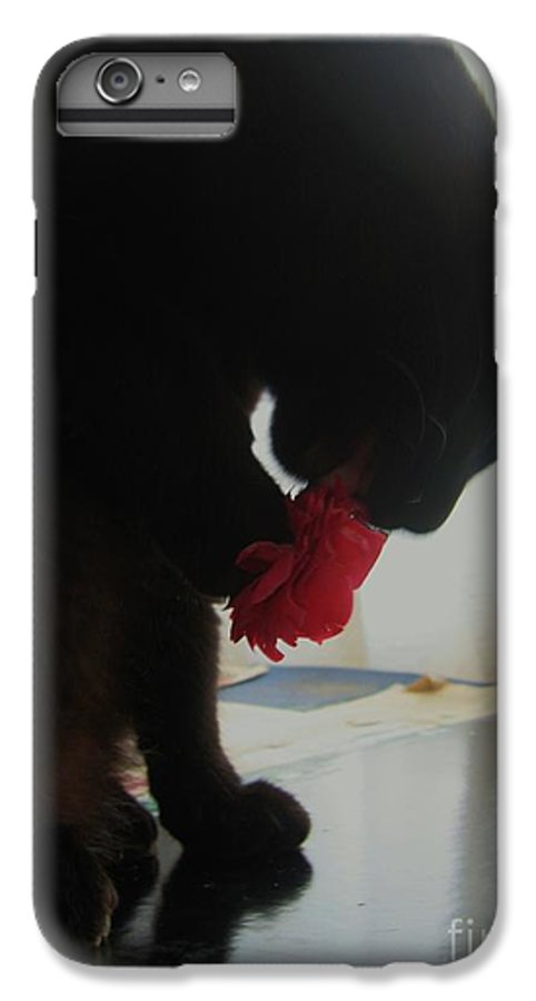 Photograph Cat Black Red Flower Camellia IPhone 7 Plus Case featuring the photograph Cat Eating Camellia by Seon-Jeong Kim