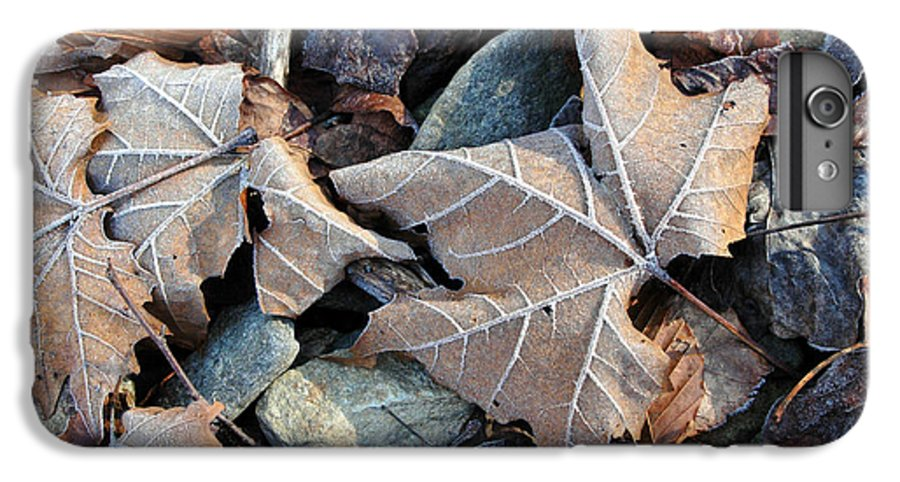 Leaf IPhone 7 Plus Case featuring the photograph Untitled by Kathy Schumann