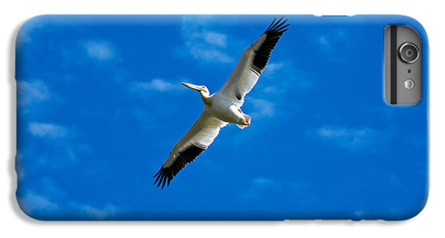 American IPhone 7 Plus Case featuring the photograph American White Pelican by Marilyn Hunt