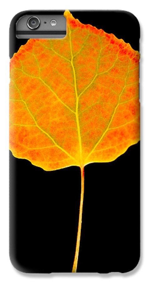 Leaf IPhone 7 Plus Case featuring the photograph Aspen Leaf by Marilyn Hunt