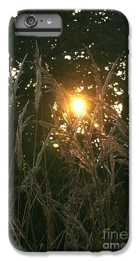 Light IPhone 7 Plus Case featuring the photograph Autumn Grasses In The Morning by Nadine Rippelmeyer