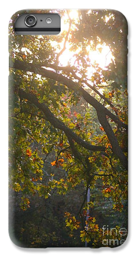 Autumn IPhone 7 Plus Case featuring the photograph Autumn Morning Glow by Nadine Rippelmeyer