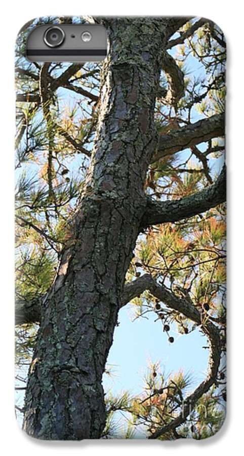 Tree IPhone 7 Plus Case featuring the photograph Bald Head Tree by Nadine Rippelmeyer