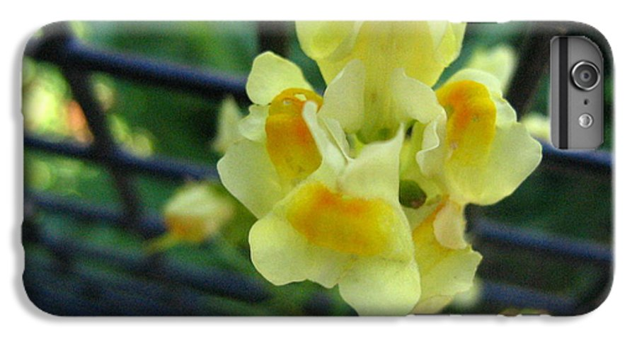Flower IPhone 7 Plus Case featuring the photograph Between The Fences by Melissa Parks