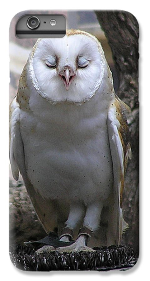 Barn IPhone 7 Plus Case featuring the photograph Blinking Owl by Louise Magno
