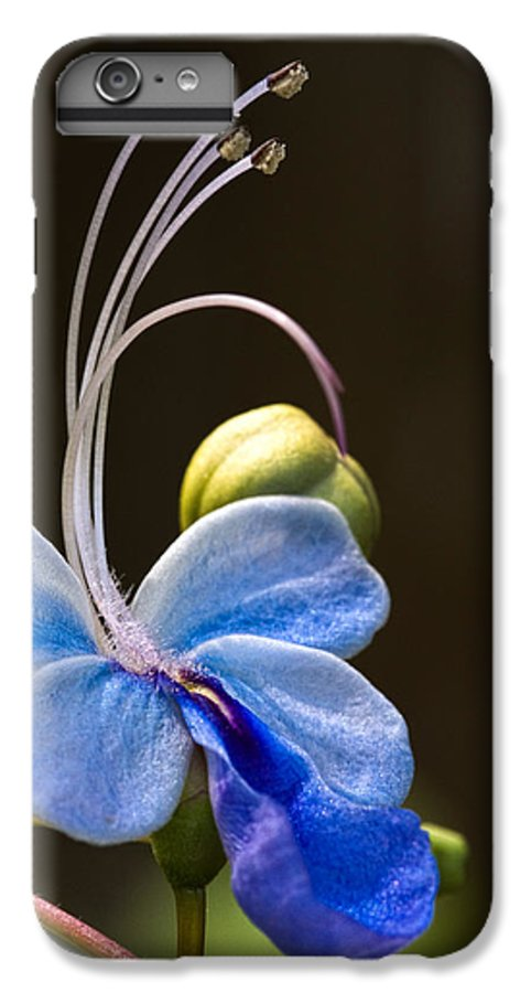 Flower IPhone 7 Plus Case featuring the photograph Blooming Butterfly by Christopher Holmes