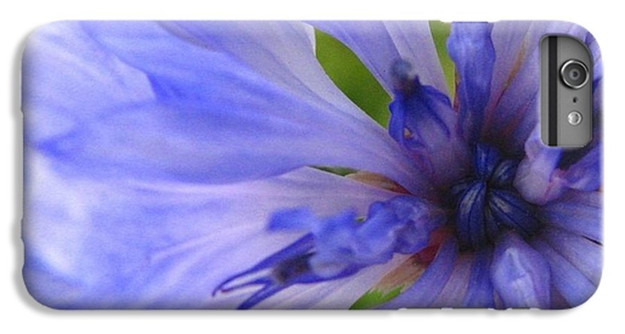 Flower IPhone 7 Plus Case featuring the photograph Blue Princess by Rhonda Barrett