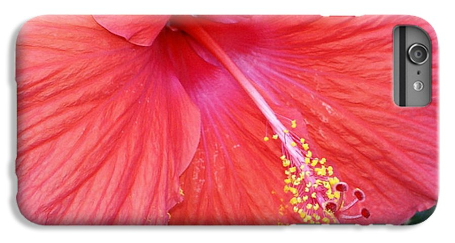Flowers IPhone 7 Plus Case featuring the photograph Blushing Stamen by Debbie May