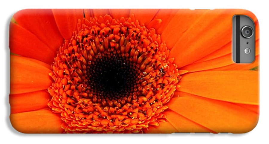 Flower IPhone 7 Plus Case featuring the photograph Bright Red by Rhonda Barrett