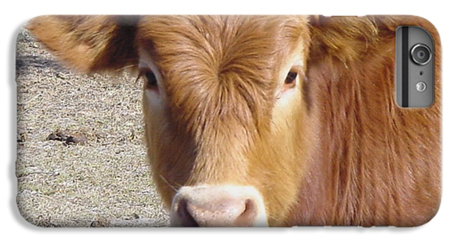 Farm IPhone 7 Plus Case featuring the painting Calf Smiles by Debbie May
