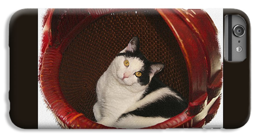 Cat IPhone 7 Plus Case featuring the photograph Cat In A Basket by Margie Wildblood
