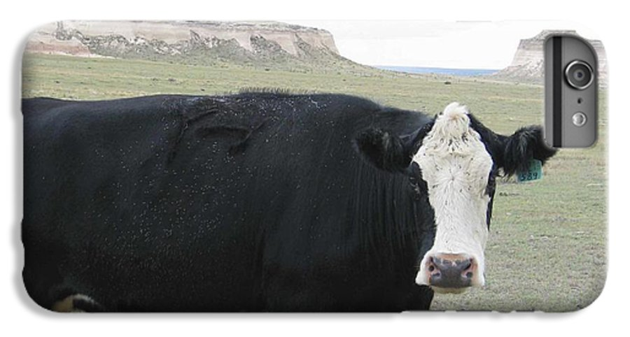 Rural IPhone 7 Plus Case featuring the photograph cattle at Pawnee Butte Colorado by Margaret Fortunato
